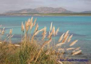 panorama - Asinara